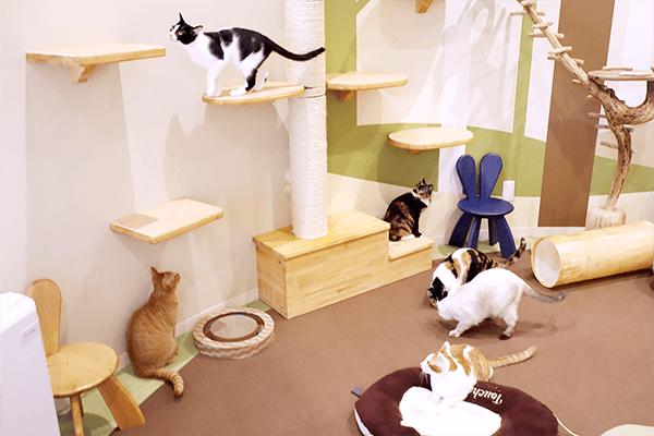 猫のふれあいサロン ロンパールーム